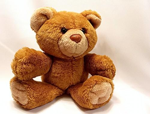 bear-678607_1280